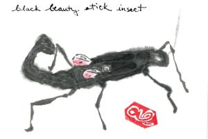 BlackBeautyStickInsect.03-01-13