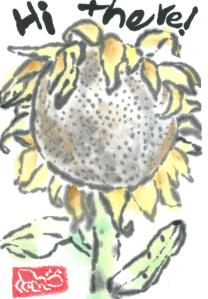 Sunflower.HiThere.07-20-13